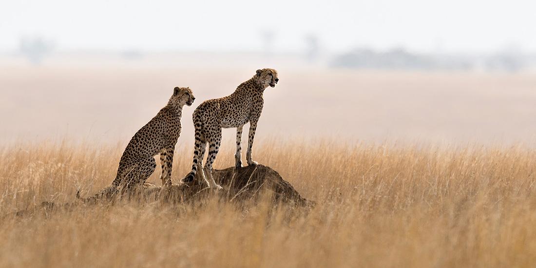 Viajes de lujo a África
