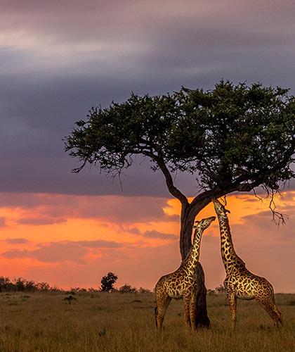 Viaje de lujo a Kenya