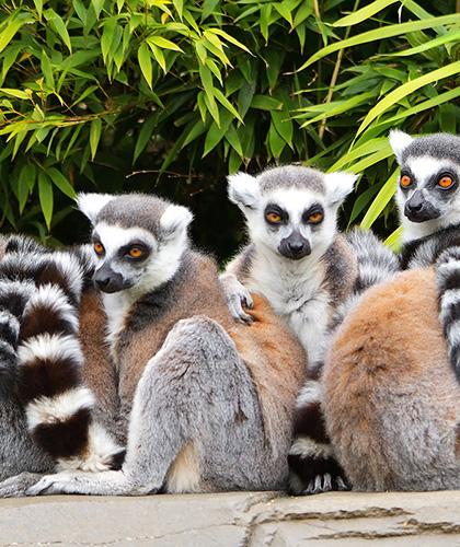 Viaje de lujo a Madagascar