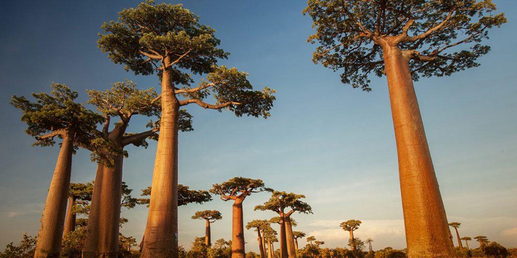 Viaje de lujo Madagascar