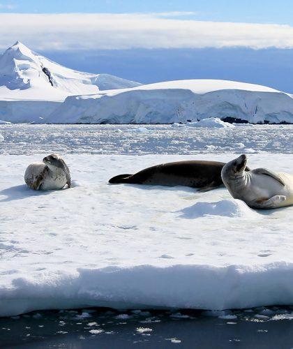 viaje Antártida
